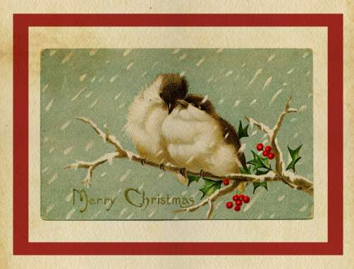 Christmas Card Vintage Birds