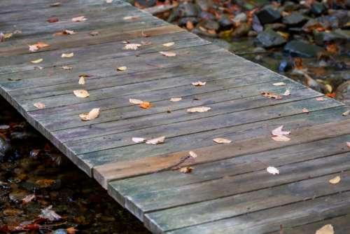fall leaves wood foliage autumn