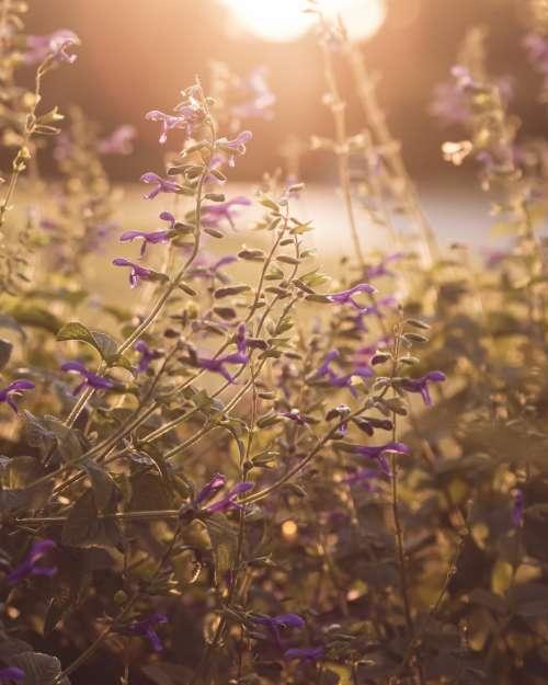 purple flowers sunlight nature garden