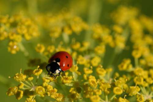 ladybug close up nature bug macro