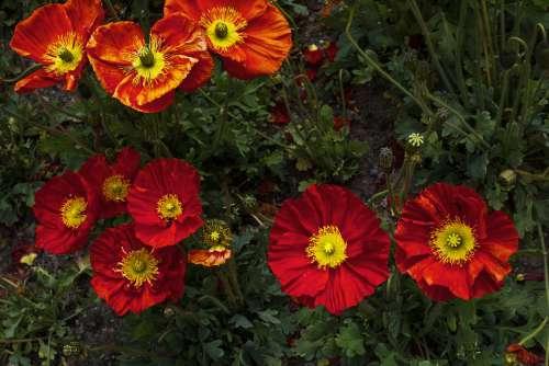 Flower Circles Photo