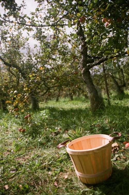An Apple Basket Sits Empty Near An Apple Tree Photo