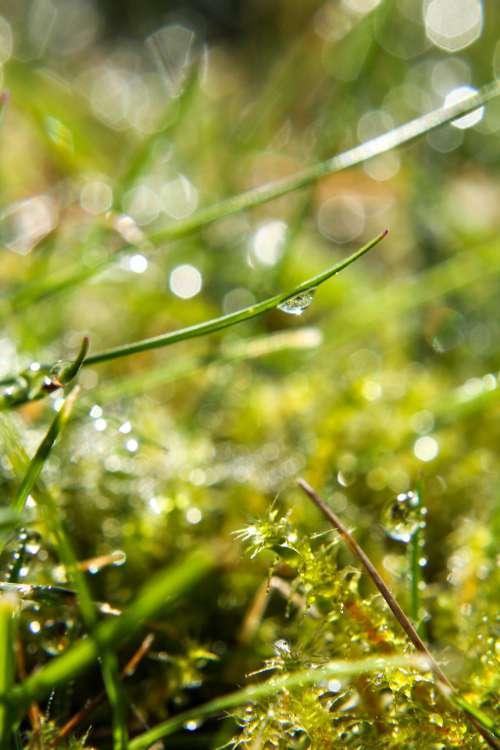 Dew Drop On Grass Photo