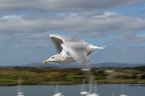 Sharp Yellow Seagull Eyes In A Blur Of Feather Flutter Photo
