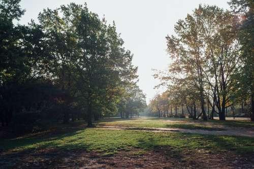 Misty Morning Trees Photo