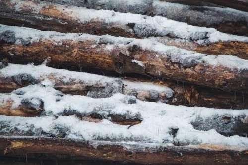 Winter Log Pile Photo
