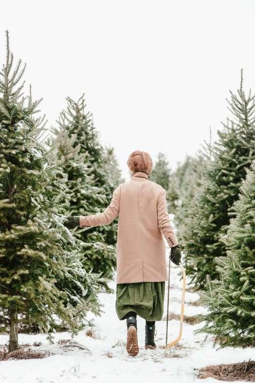 Christmas Tree Selecting Photo
