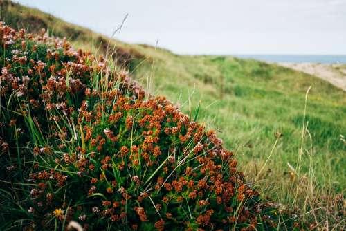 A Bush Of Furry Bulb Plants On A Hillside Photo