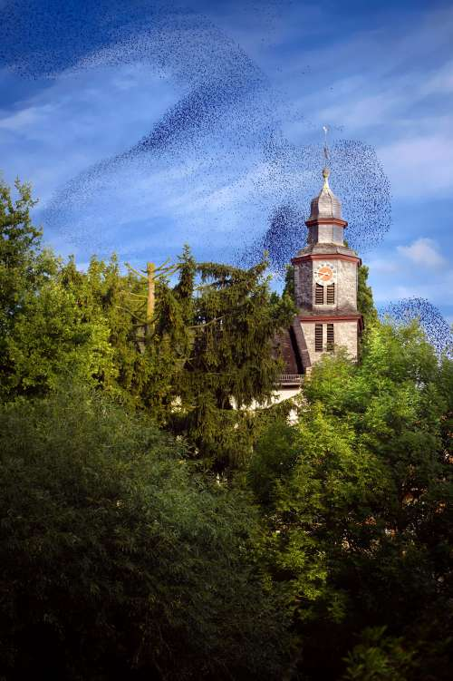 Bird Swarm Above Old Building In The Forest Photo