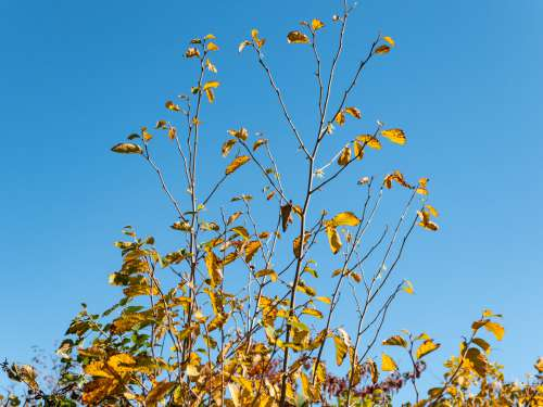 Leaves on Branches