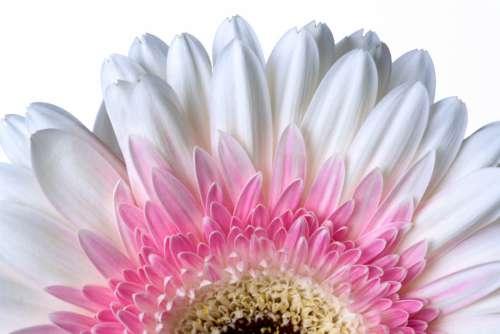 Flower Macro Free Photo