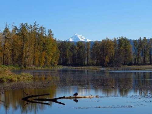 Bird Mountain Lake Free Photo