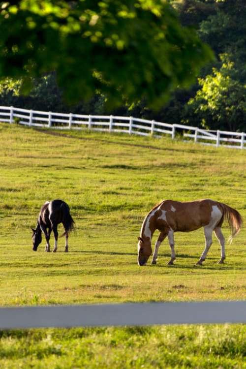 Horses Pasture Fence Free Photo