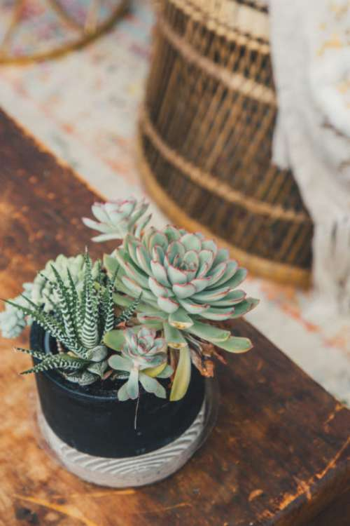 Potted Plant Free Photo