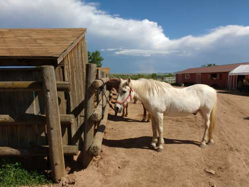 Horses at Stables