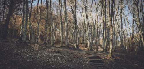 Stairs Trees Autumn Forest Nature Ladder Fall