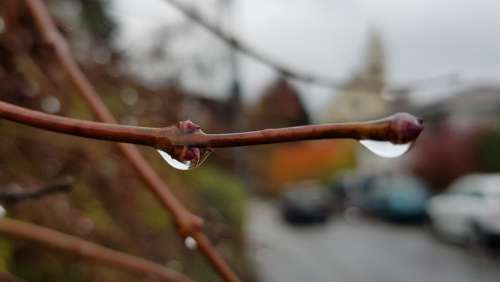 Raindrop Close Up Branch Nature Drip