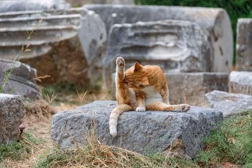 Cat Wash Yoga Temple Ruin Greece
