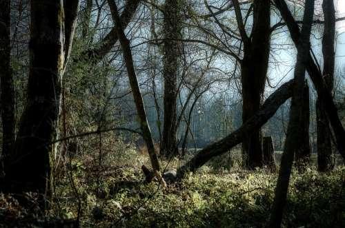 Mysticism Light Forest Nature Landscape Trees
