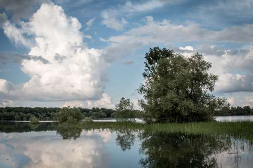 Lake East France Troyes Water Nature Tree