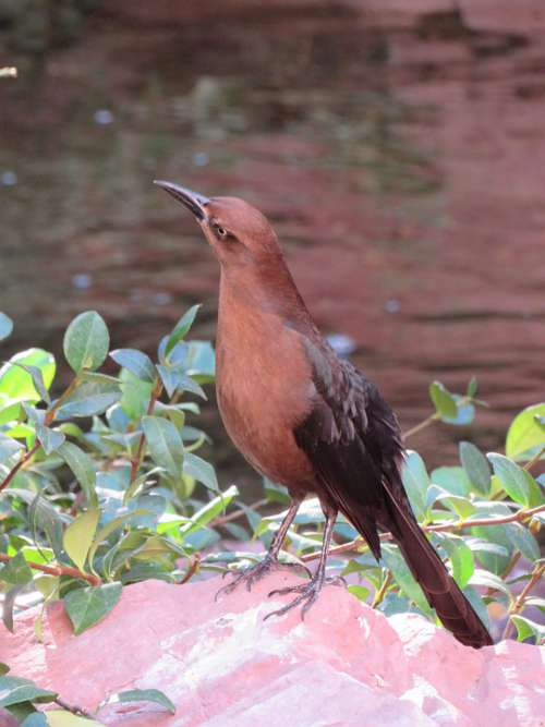 Bird Feather Animal Beak Nature Plumage Wildlife