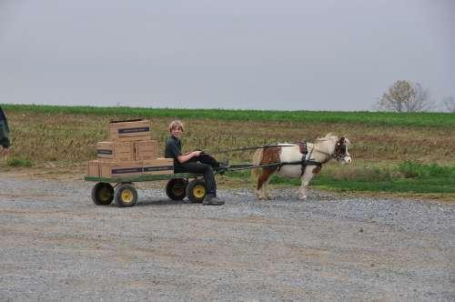 Amish Boy Cart Pony Animal
