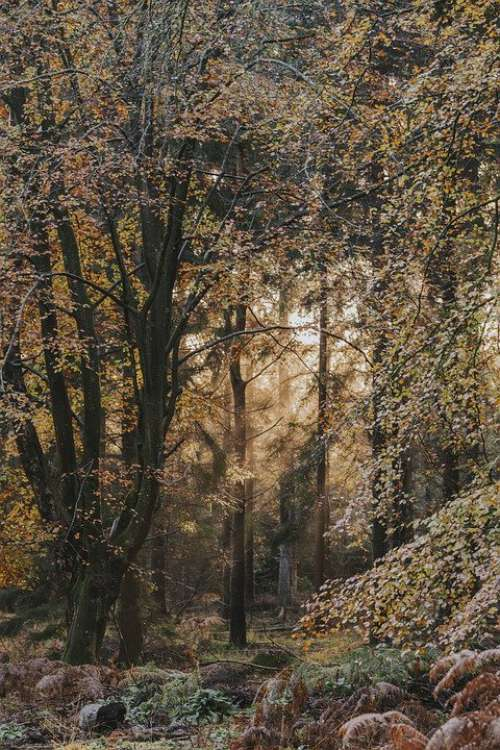 Forest Light Fog Landscape Path Mood Mystical