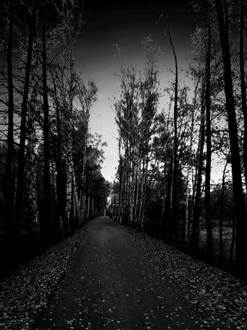 Tree Alley Spacer Twilight Birch Night Dangerous