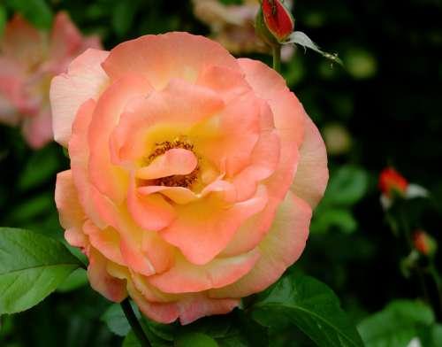 Flower Garden June Pink The Petals Closeup