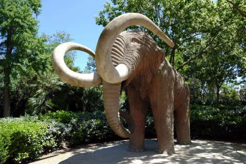Mammoth Animal Prehistoric Extinct Paleontology