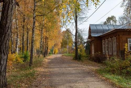 Autumn Trees Leaves Golden October Street