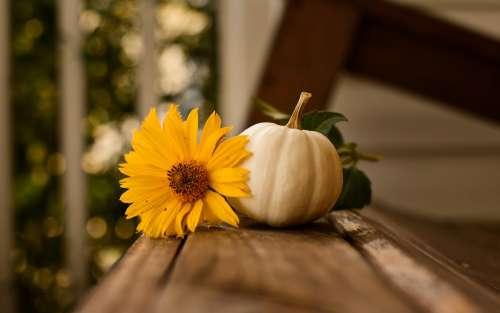 Thanksgiving Pumpkin Fall Autumn Nature Background