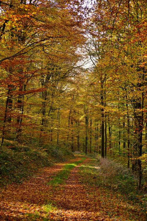 Forest Forest Path Autumn Fall Colors Trees