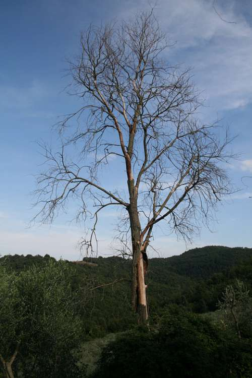 Tree Branches Bark