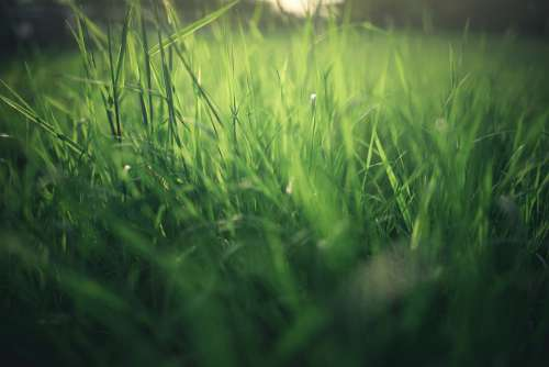 Meadow Nature Summer Spring Grass Green