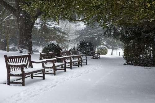 Winter Snow Park Cold Nature Landscape Wintry