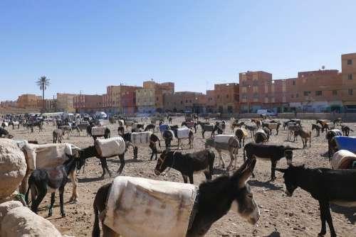 Morocco Rissani City Market Donkey Parking Souk