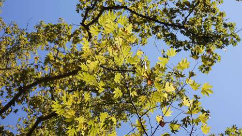 Tree Leaves Nature Green Landscape Trees