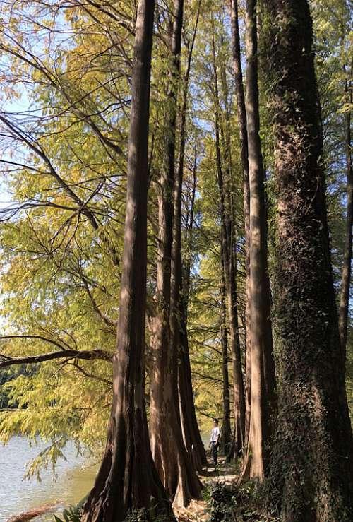 Late Autumn Woods Sunshine