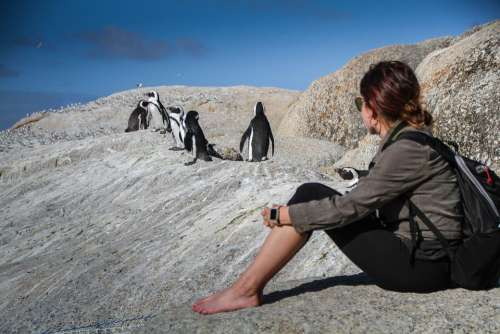 Penguins South Africa Cape Town Travel Nature