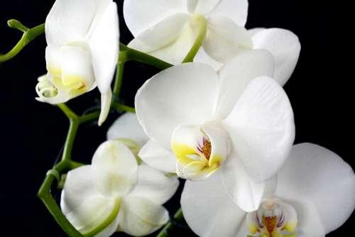 Orchid Flower Plant Nature Tropical Petal
