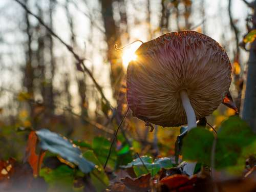 Mushroom Landscape Forest Sunset Outdoors