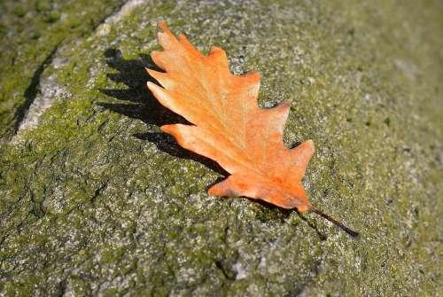Leaf Nature Stone Brown Grain Shadow