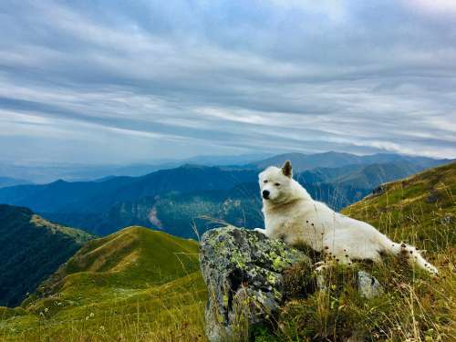 Dog Animal Husky Nature Animal Picture Mountains