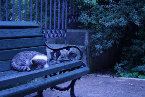 Athens Greece Sleeping Cat Bench Green Dark