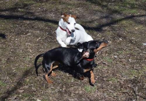 Dog Jack Russell Terrier Each Friendship Animals
