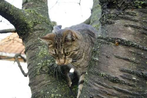 Cat Cherrytree Cherry Tree Garden Hide Chasing