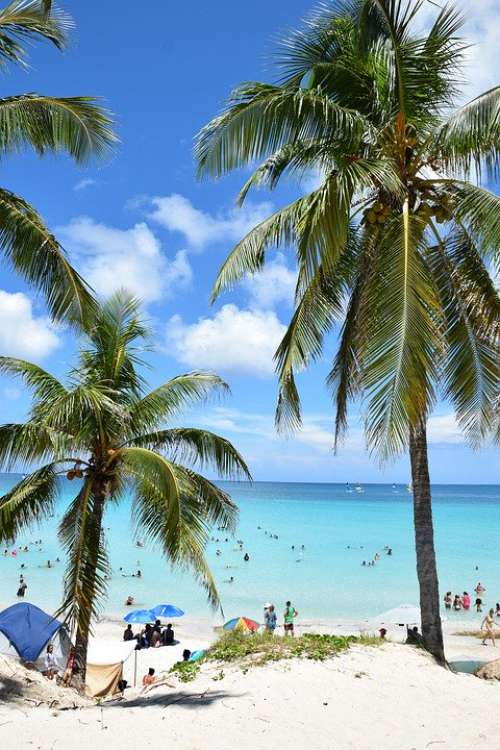Palm Beach Palm Sea Vacations Sky Horizon