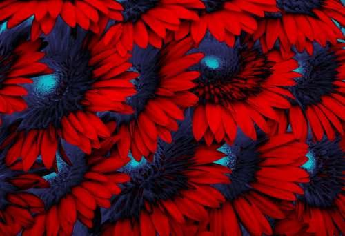 Stylized Flower 16