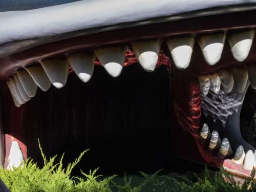 Whale Mouth Open